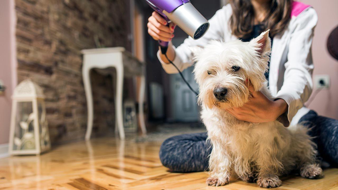 Mujer secando el pelo a su perro