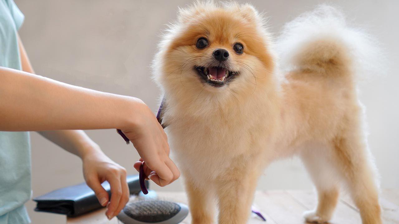 Mujer retocando el pelo de su perro