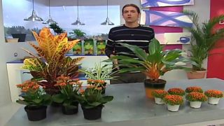 Plantas naranjas
