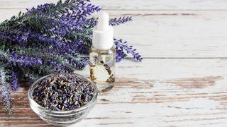 Los 5 artículos de salud más leídos en 2020 - Lavanda, planta medicinal de propiedades calmantes