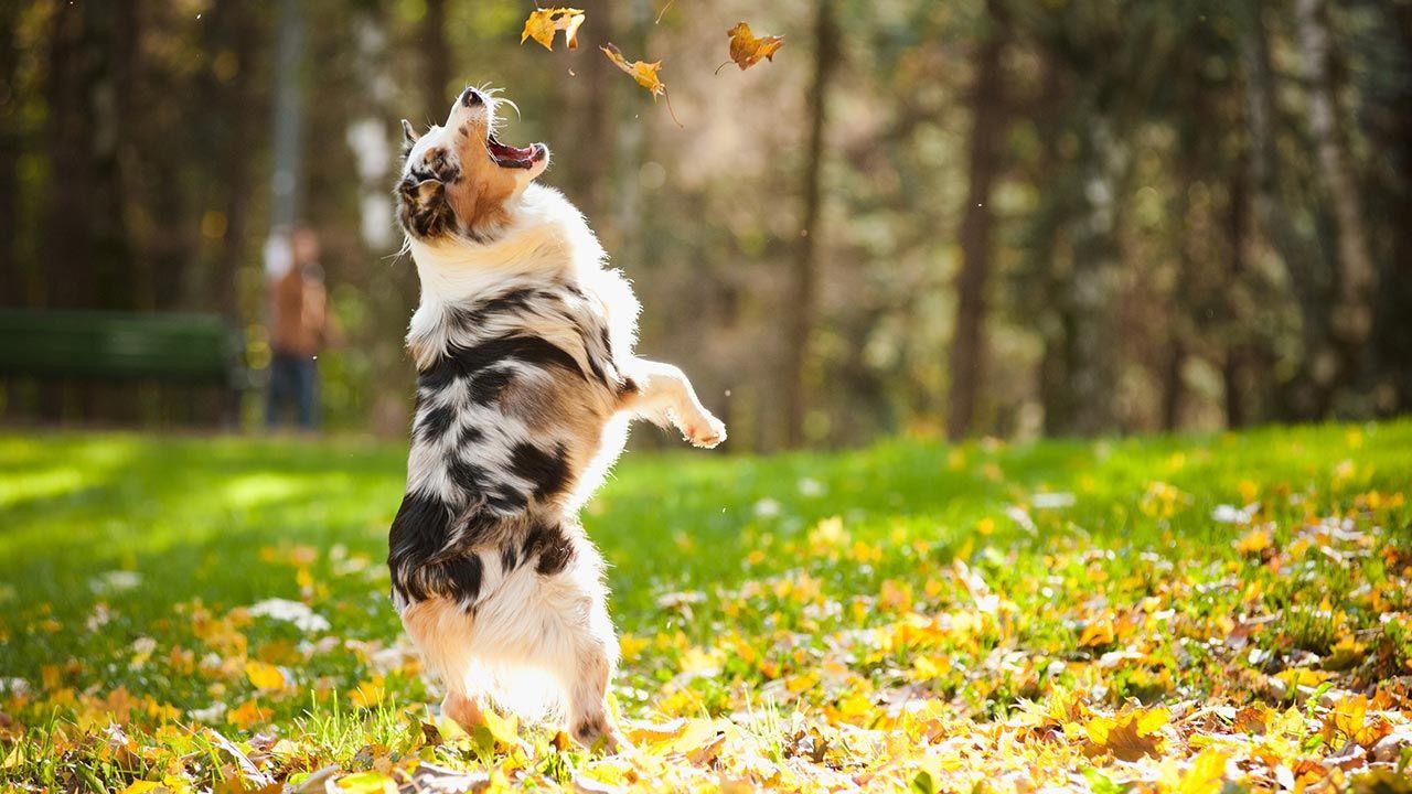 Perro saltando en el parque