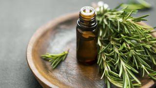 Romero, planta aromática con acción antidepresiva y estimulante circulatoria - Fricciones