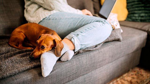 Todo lo que debes saber antes de adoptar una mascota en Navidad