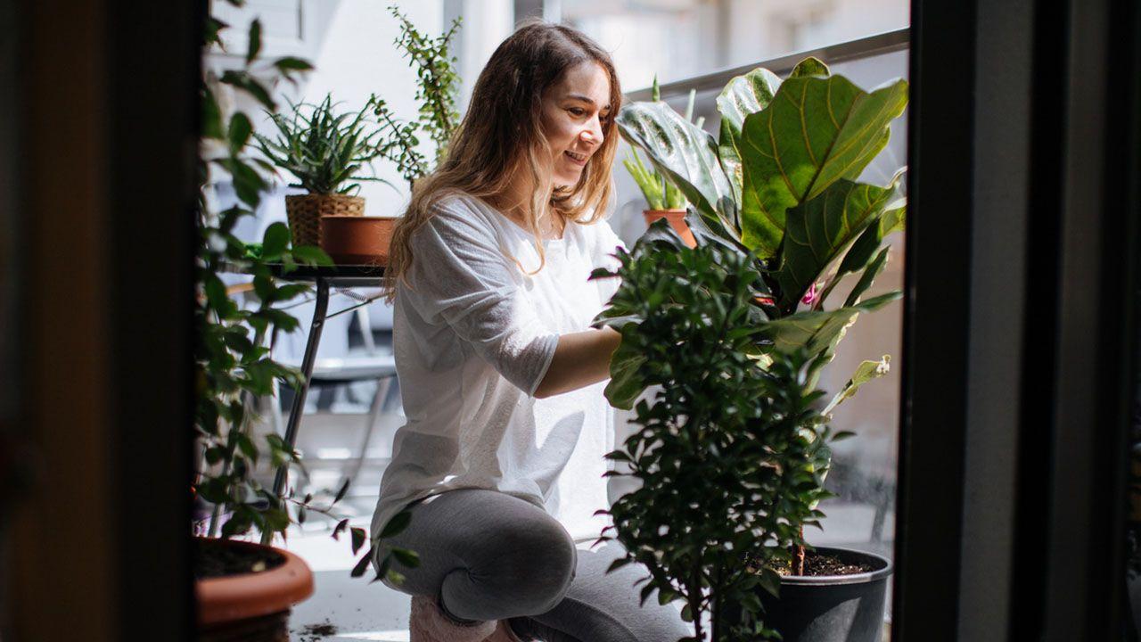 ¿Qué variedades de plantas escoger para tu hogar?