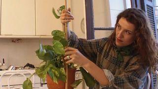 Cómo construir un tutor o guía para las plantas