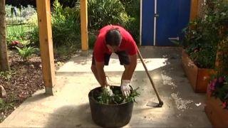 Insecticida ecológico con ortiga