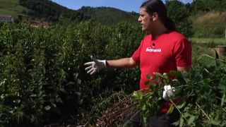 Cómo crear insecticidas ecológicos