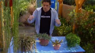 Variedades y cuidados de plantas suculentas colgantes