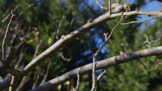 Cómo proteger frutales en invierno