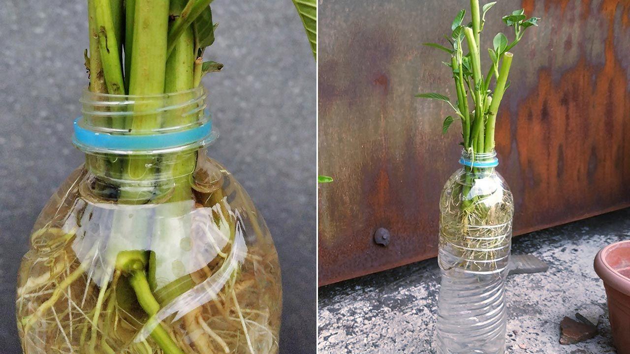 Macetero original para plantas en agua