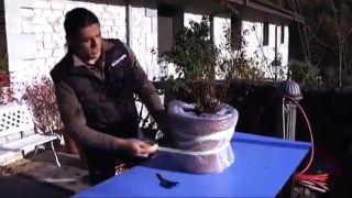 Cómo proteger los tiestos de heladas y fríos