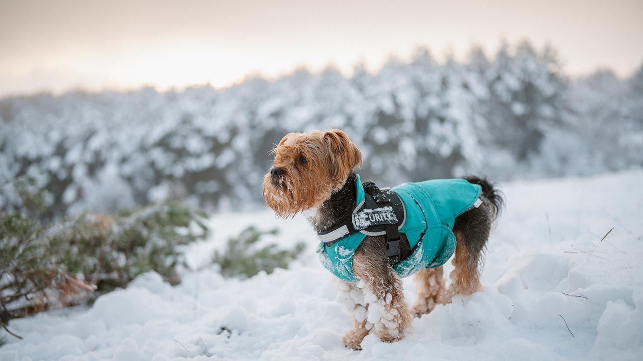 Perro con abrigo impermeable en la nieve