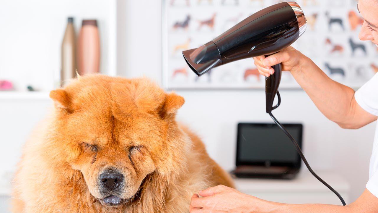 Chico secándole el pelo a su perro