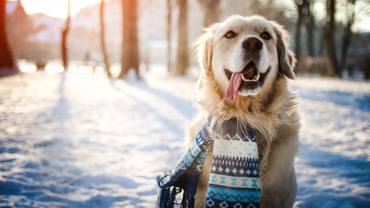 Perro con bufanda en la nieve