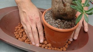 jardineria-composicion-cactus-piedra-p1