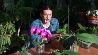 Cuidados de las orquídeas en periodo de reposo