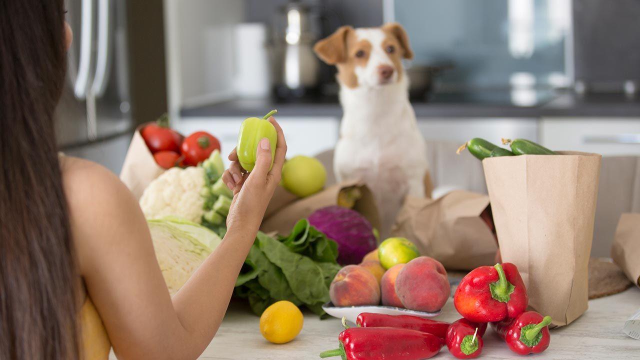 Perro pensativo mientras le enseñan frutas y verduras