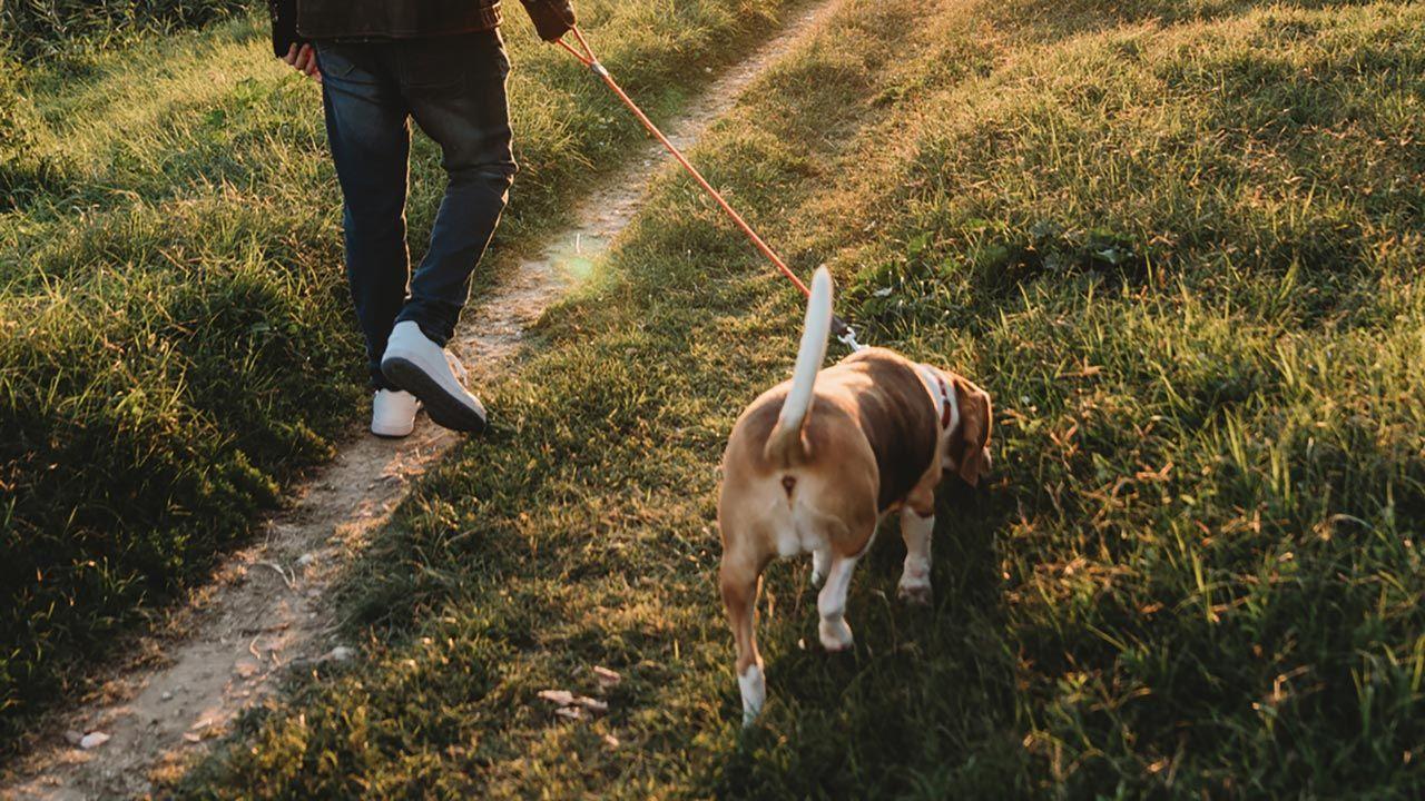 Perro olfateando por el parque