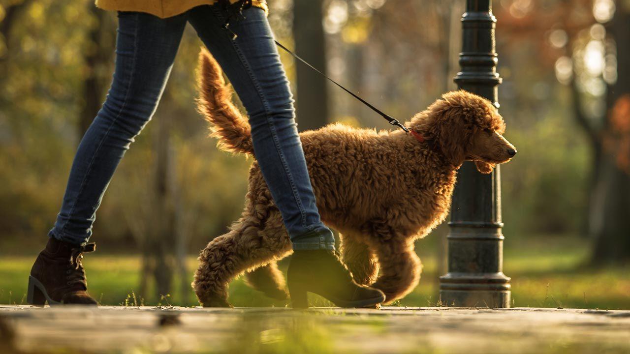 Perro corriendo hacia el parque