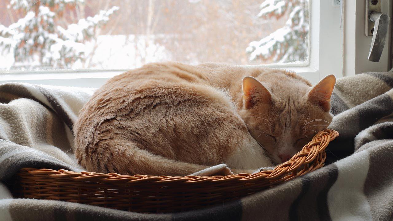Gato en su cama cerca de la ventana