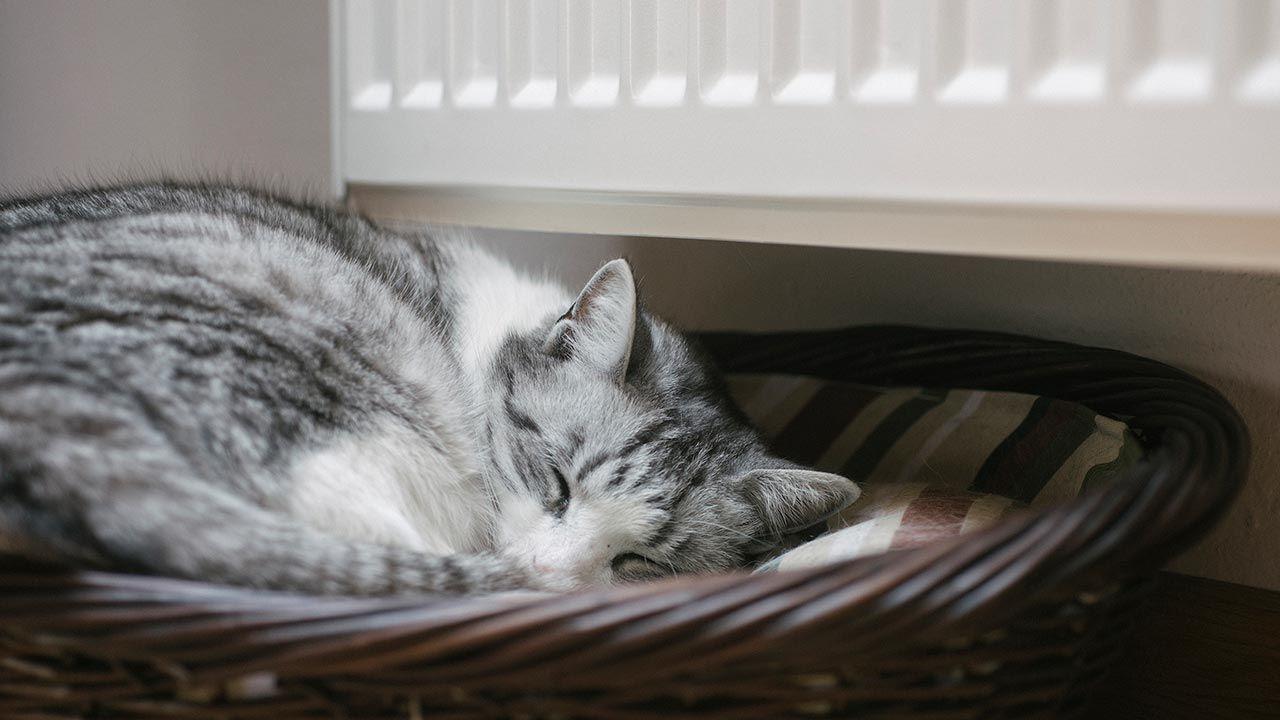 Gato en su cama cerca del radiador