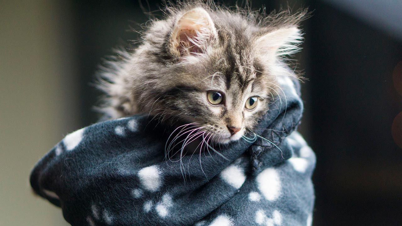 Gatito con una manta