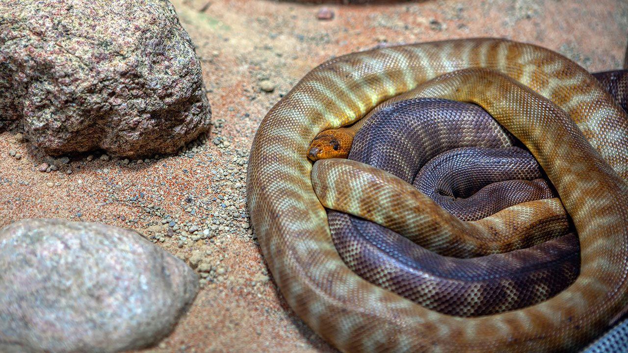 Serpientes agrupadas durante su hibernación