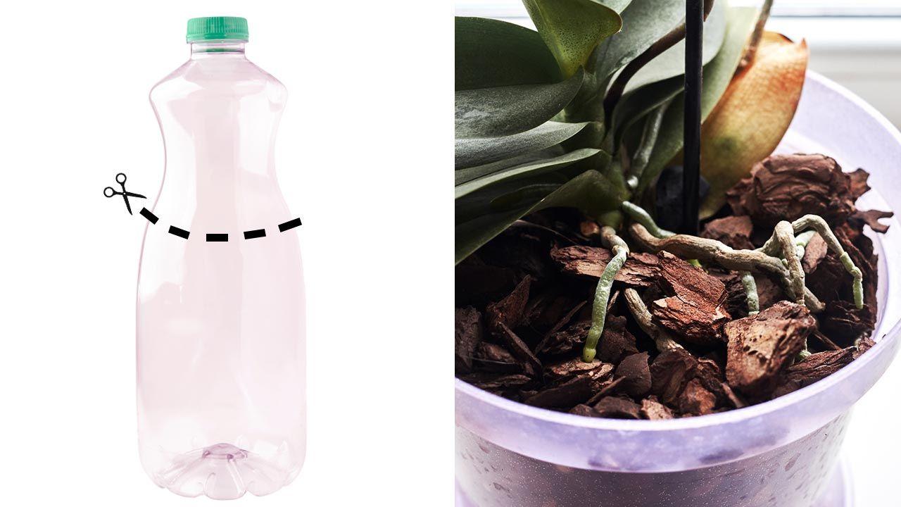 Macetero trasparente para orquídeas