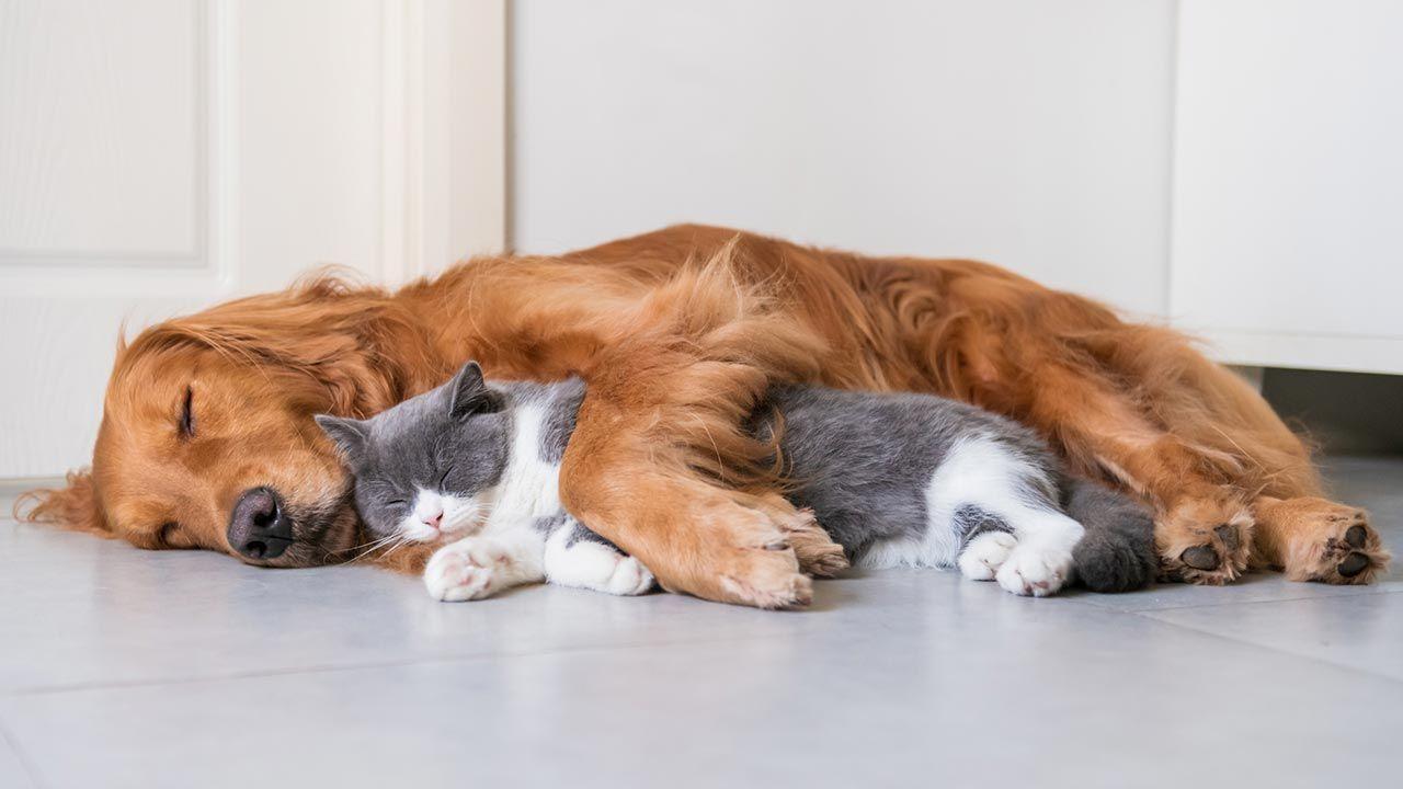 Abrazo entre perro y gato