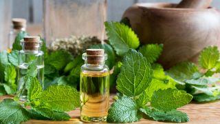 Melisa, planta medicinal relajante y tonificante - Crema o ungüento
