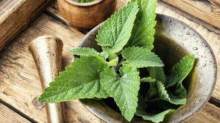 Melisa, planta medicinal relajante y tonificante - Loción