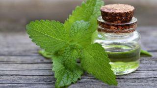 Melisa, planta medicinal relajante y tonificante - Tintura