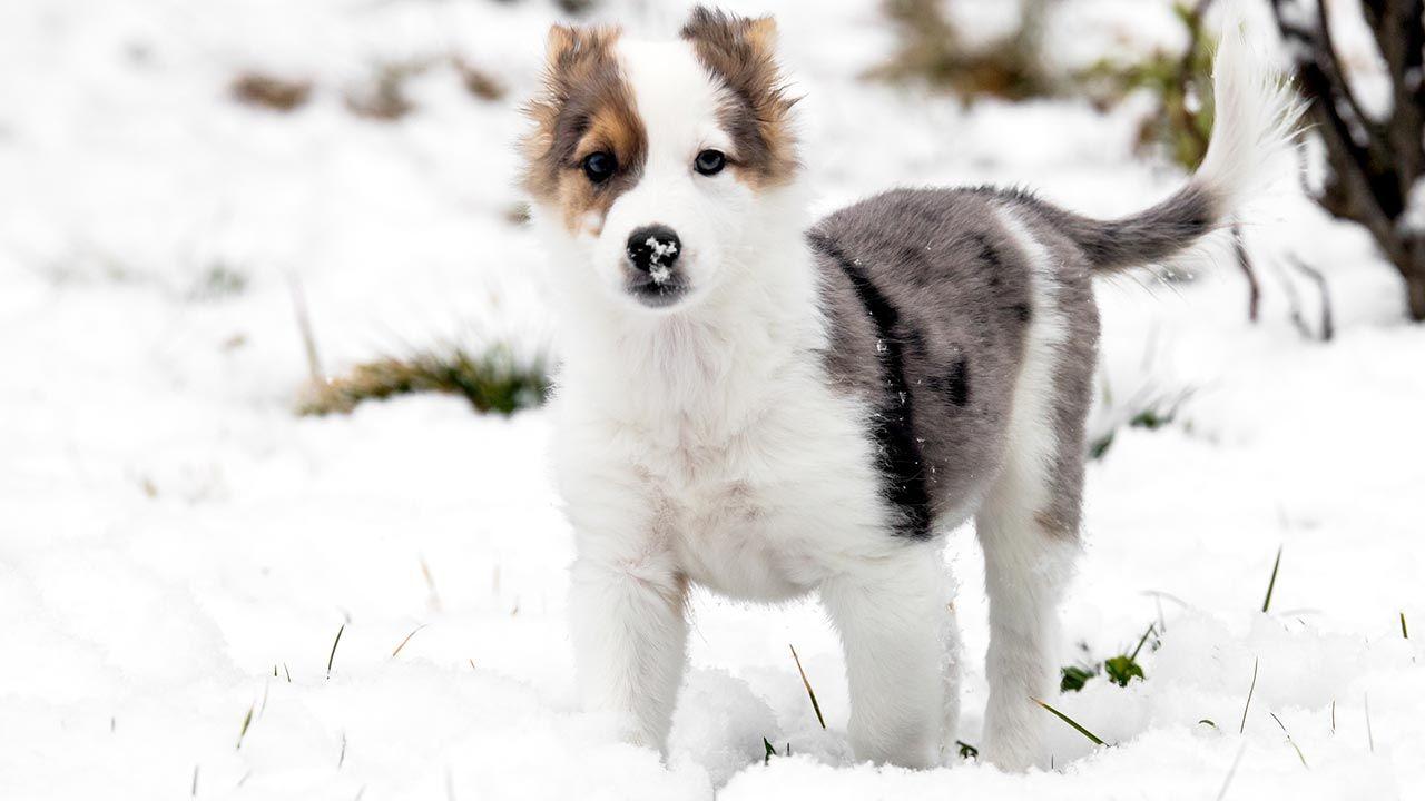 Perro pequeño en la nieve