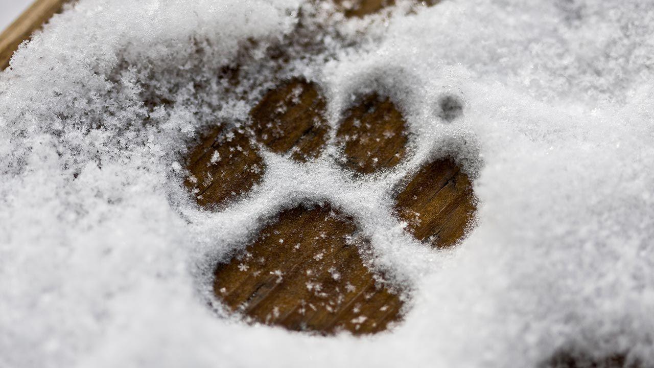 Huella de perro sobre la nieve