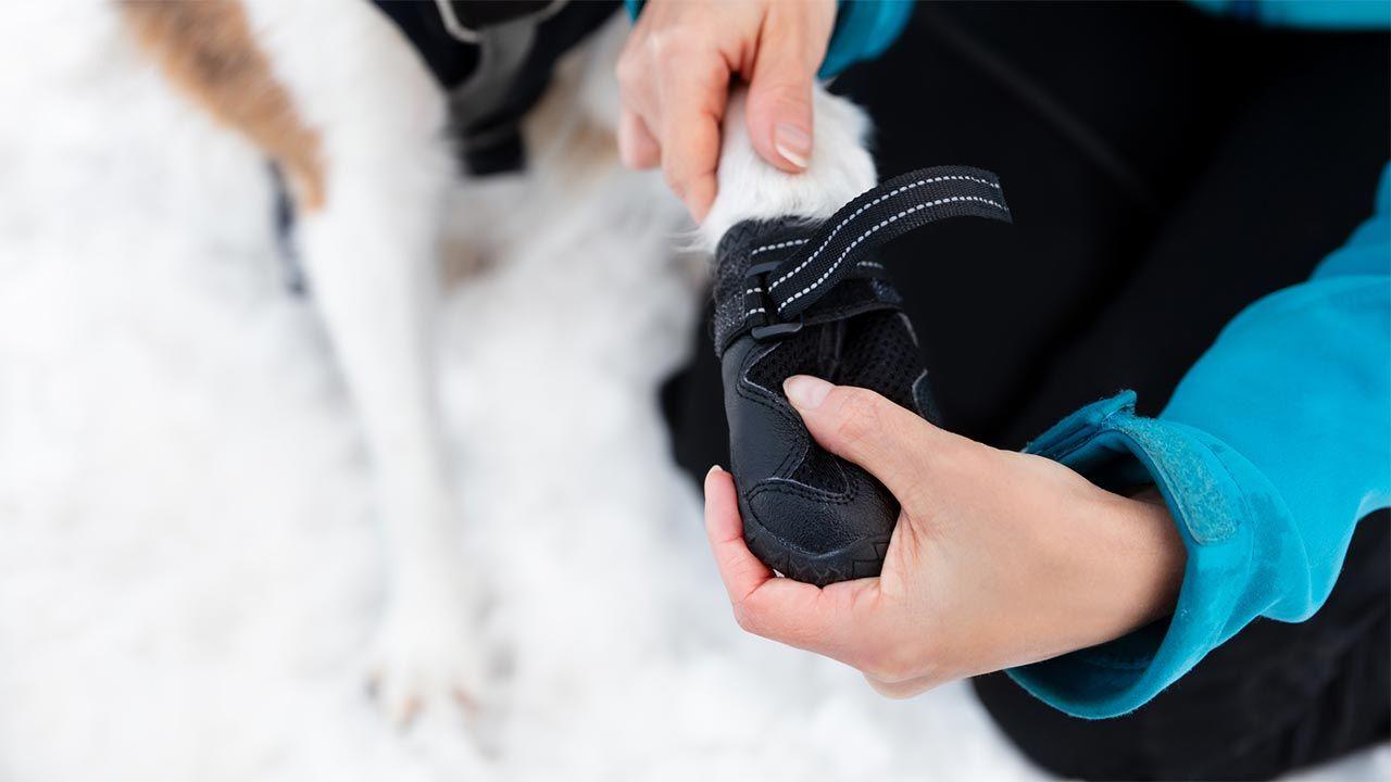 Perro con una botita de nieve