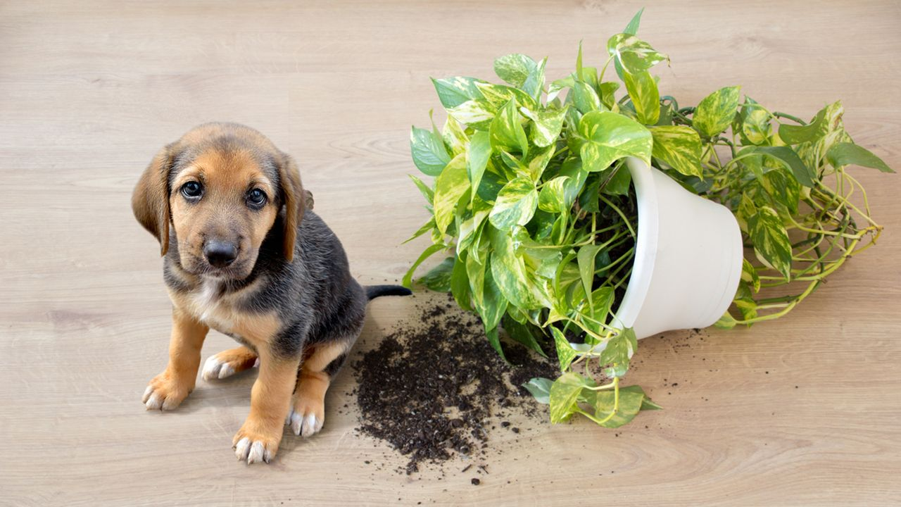 ¿Por qué mordisquean las plantas?