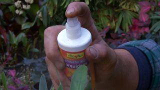Productos para proteger a la orquídeas durante el periodo vegetativo