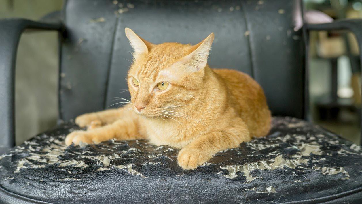 Solucionar los arañazos de un sofá de piel