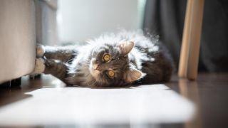 ¿Cómo arreglar un sofá arañado por gatos?