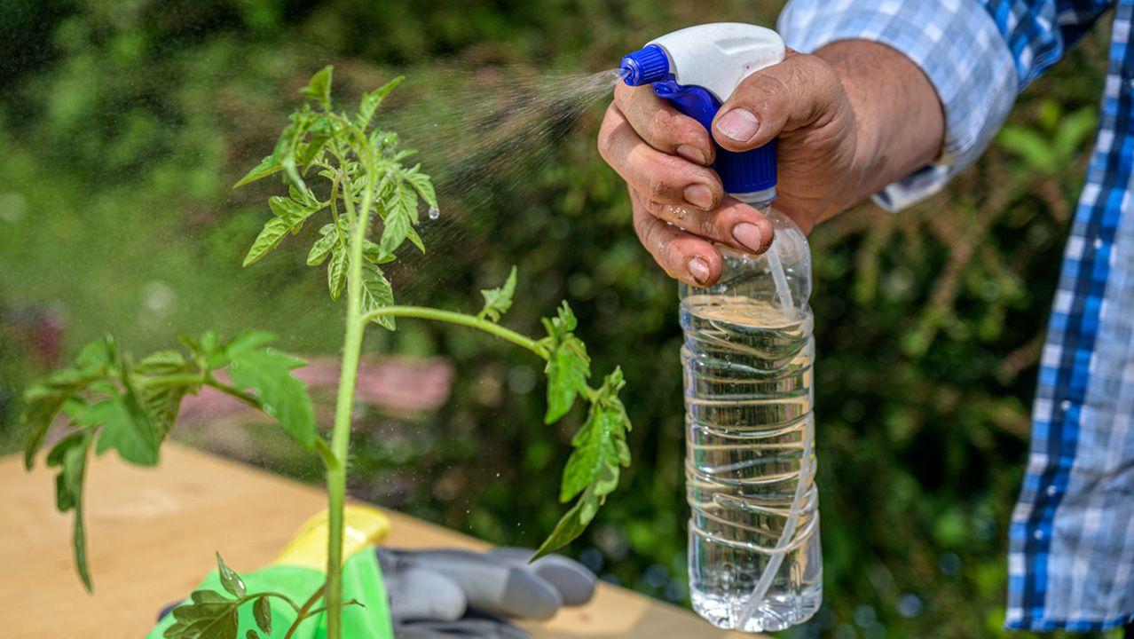 Botella de plástico convertida en regadera para plantas
