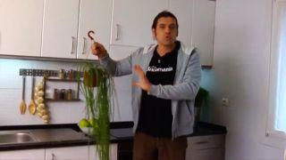 ¿Cada cuánto se deben regar los Rhipsalis en casa?