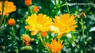 Cómo hacer una bomba de baño efervescente de flores - Caléndula