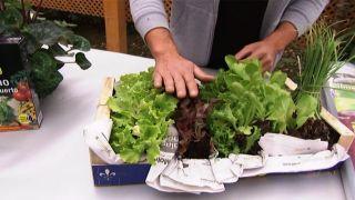 Cómo instalar un invernadero en la huerta