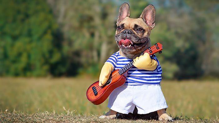 Perro con ropa y guitarra