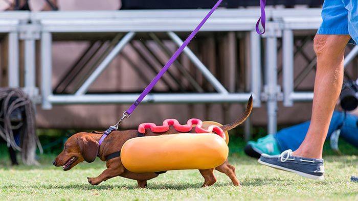 Perro disfrazado de salchicha