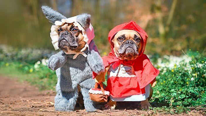 Perros disfrazados de caperucita y el lobo
