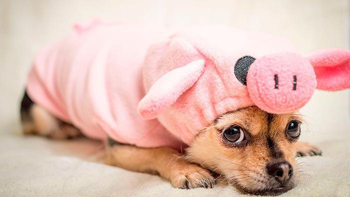 Perro disfrazado asustado
