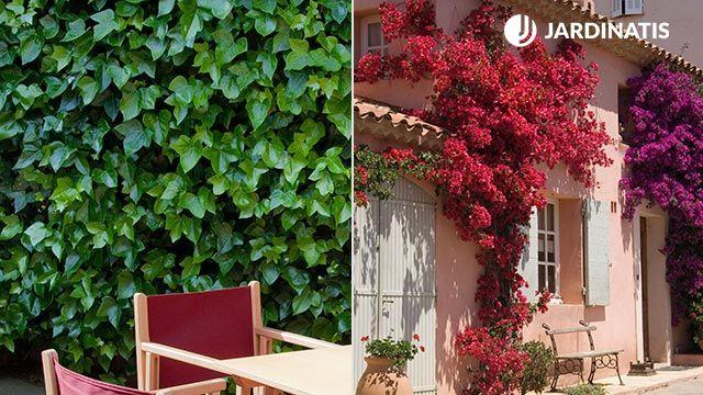 Diferentes plantas para decorar fachadas