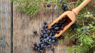 Enebro, planta medicinal antiséptica y antirreumática - Enjuague capilar