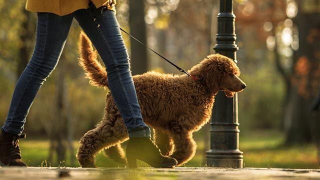 Perro paseando por la calle